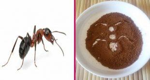 صور كيف تتخلص من النمل , طرق فعاله للتخلص من النمل