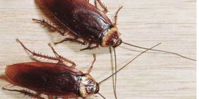 صور تفسير حلم الصراصير في البيت , رؤية الصرصار في المنام