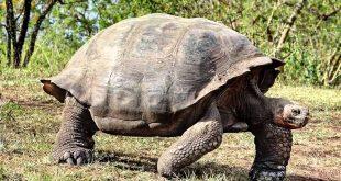 اطول الحيوانات عمرا , تعرف على الحيوانات ذات العمر الطويل