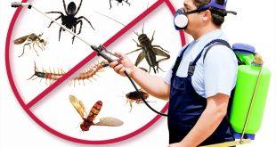 شركة مكافحة حشرات بمكه , كيفية القضاء علي الحشرات