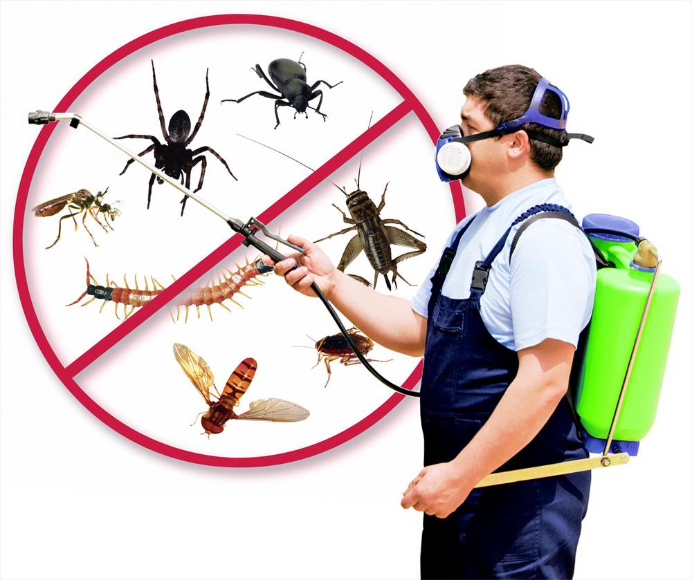 صورة شركة مكافحة حشرات بمكه , كيفية القضاء علي الحشرات