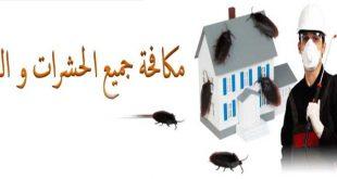 شركة مكافحة حشرات , افضل شركات للقضاء علي الحشرات نهائيا