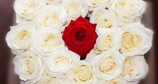 صور اجمل صور باقات الورد , احلى واشيك بوكيهات ورد