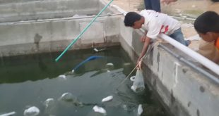 صور كيفية تربية الاسماك في الاحواض , كيف يتم الاستزراع السمكي؟