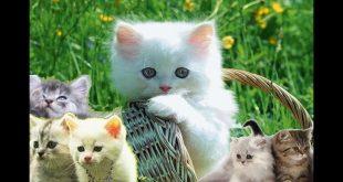 صورة انواع القطط واسمائها , اشكال وانواع للقطط لم تعرفها قبل