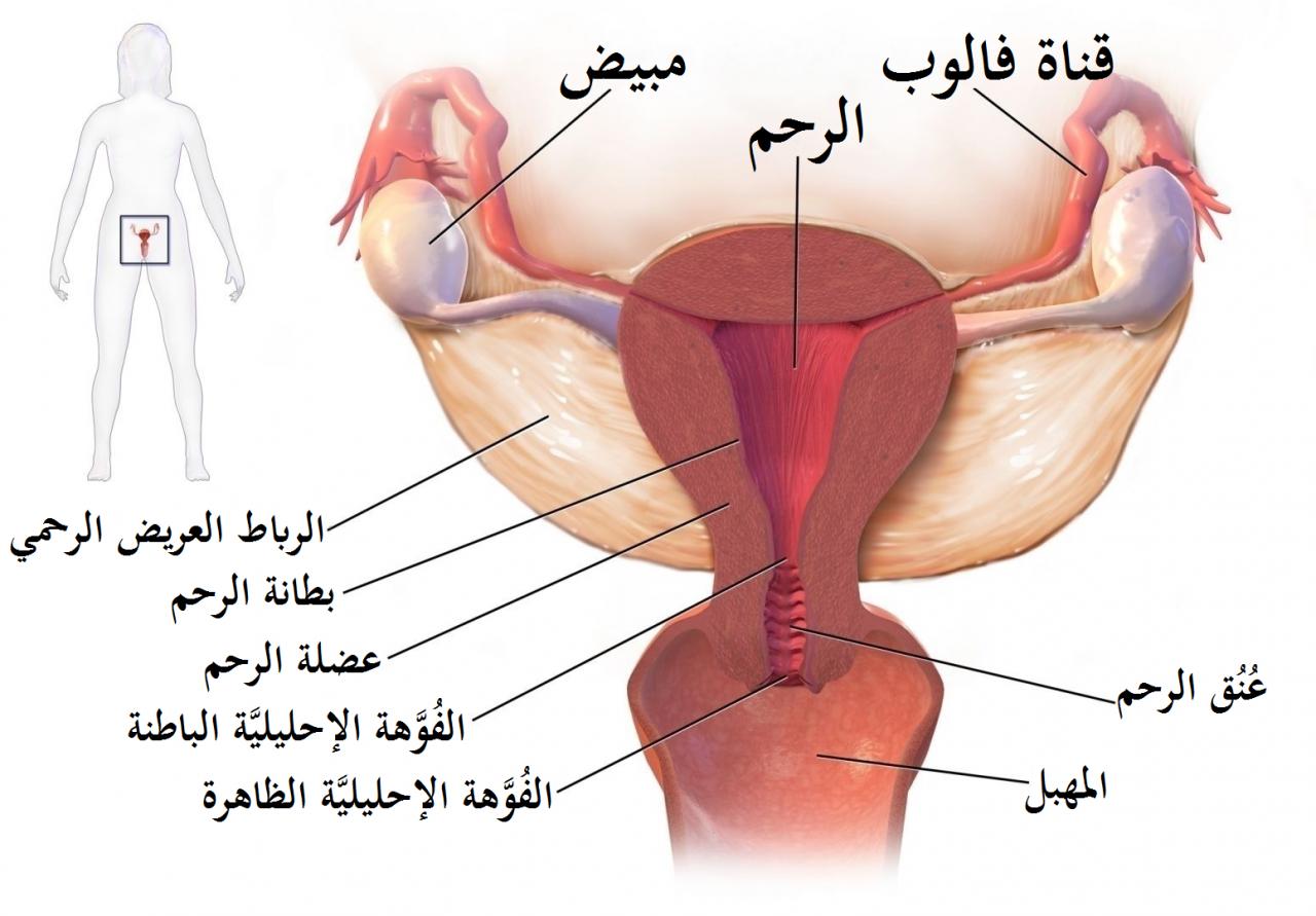 صورة ظهور حبة عند فتحة المهبل , طرق الوقاية منها