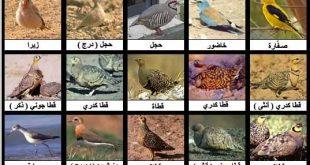 صورة انواع الطيور واسمائها ومعلومات عنها , لمعلوماتك اعرف انواع الطيور واسمائها