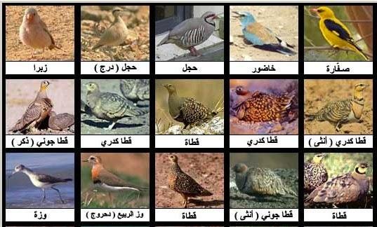 انواع الطيور واسمائها ومعلومات عنها لمعلوماتك اعرف انواع الطيور واسمائها ازاي