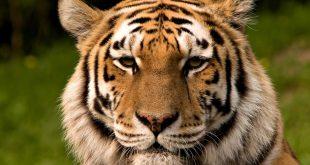 صورة حيوانات على وشك الانقراض , تعرف علي اهميه التنوع البيولوجي في الطبيعه