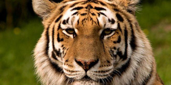 صور حيوانات على وشك الانقراض , تعرف علي اهميه التنوع البيولوجي في الطبيعه