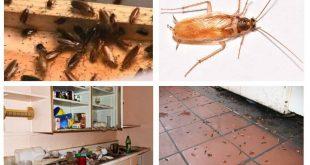 صور طريقة التخلص من صراصير المطبخ , طرق غير مضره تخلصك من الحشرات