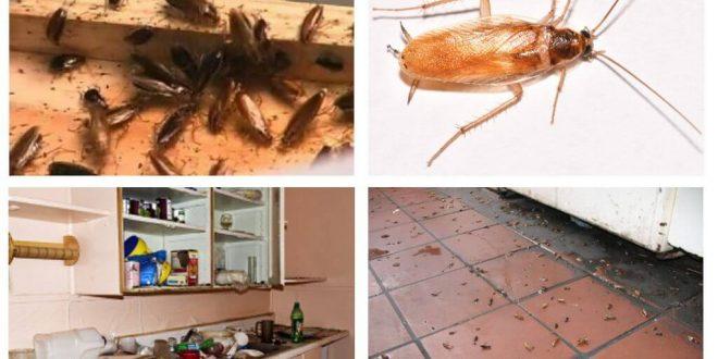 صورة طريقة التخلص من صراصير المطبخ , طرق غير مضره تخلصك من الحشرات