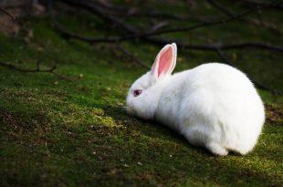 صورة فترة حمل الارنب , معلومات جديده ومفجاه عن الثدييات