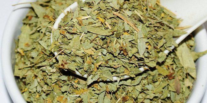 صورة عشبة سنا مكي للشعر , فوائد رهيبه من الاعشاب الطبيعيه هتبهرك