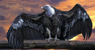 صورة اكبر نسر في العالم , تعرف علي اخطر الطيور الجارحه علي الاطلاق