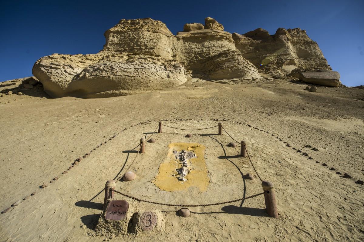 صورة محمية وادي الريان , الطبيعه على اصولها
