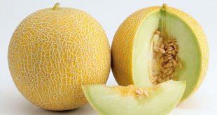 صورة الفرق بين الخربز والشمام , معلومه لا تعرفها للخربز و الشمام