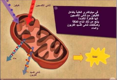 صورة بحث عن التنفس الخلوي , اهميه التنفس الخلوى
