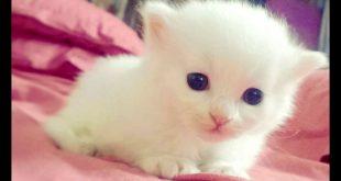 صورة صور القطط الصغيرة , قطط صغيرة مفيش في رقتها