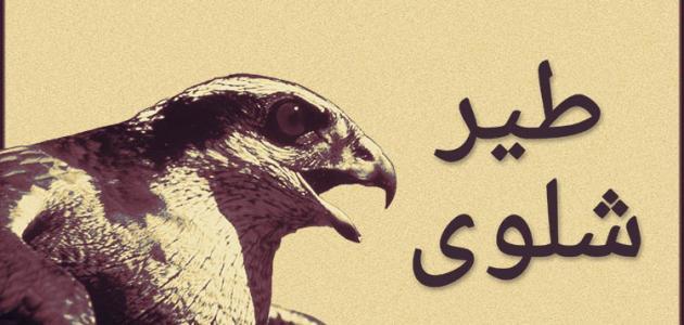 صورة قصة طير شلوى , شجاعه و اقدام طير شلوى