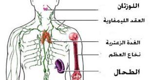 صورة مكونات جهاز المناعة , كرات الدم البيضاء و اهميتها لجهاز المناعه