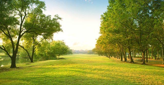 صورة تفسير حلم الارض الخضراء للبنت , الارض الخضراء في المنام ومعناها