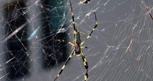 صورة هل تعرف ما سبب وجود العنكوب في بيتك , ما معنى وجود العنكبوت في البيت