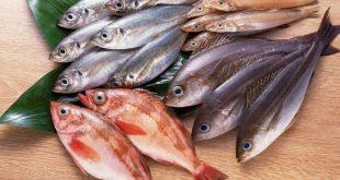 صورة حلمت رايت السمك مع العلم اني حامل , تفسير حلم السمك للحامل