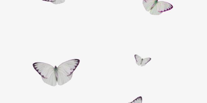 صورة صوره خلفيه بيضاء , ضع خليفات للهاتف لونها ابيض